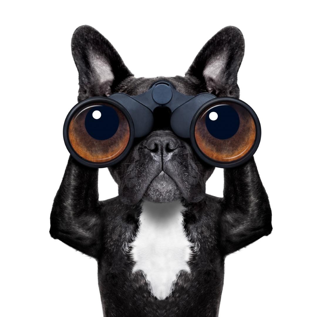 כלב עם משקפת
